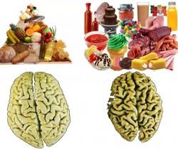 Dieta mediterrânea e maior volume cerebral