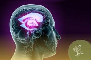 Hidrocefalia de Pressão Normal – A Demência que é Possível Tratar